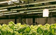 浙江:推新政激励农业科技人员创新创业 鼓励农业科技成果转化