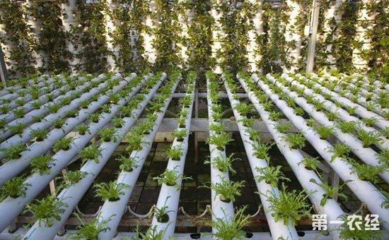 广东番禺:提升农业科技服务水平  助推农业增效农民增收