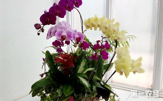 7种有着美好寓意的盆栽植物介绍!红红火火添喜气