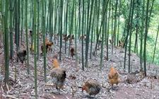 四川岳池县:特色种养助农增收