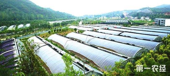 关于对山区农村如何发展现代农业的思考