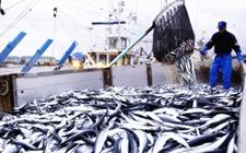 <b>俄罗斯、挪威等海外国家渔业最新动态</b>