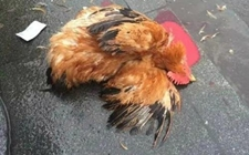 乘客带活禽坐火车被拦 现场杀鸡后再过安检进站