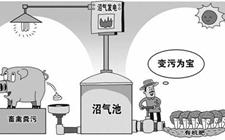 山东肥城2017年畜禽粪便处理利用芋高达93%