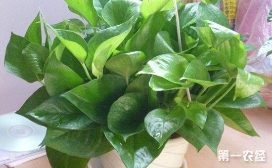 7种常见室内植物的水培方法介绍!分分钟扮靓家居环境