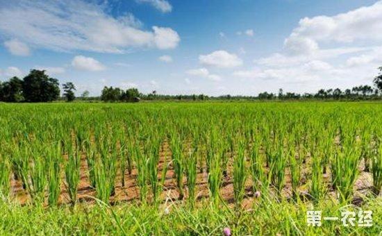 一号文件:创新投融资机制  推进乡村振兴战略实施