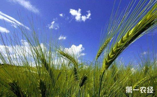 推进乡村绿色发展  实现百姓富与生态美的统一