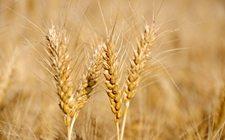 吉林:规划6500万亩粮食生产功能区 实现农业生产现代化