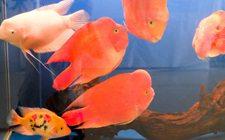 <b>观赏鱼疾病如何防治?观赏鱼常见疾病的治疗方法</b>