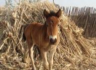 驴怎么进行有效催肥?驴肉催肥的方法