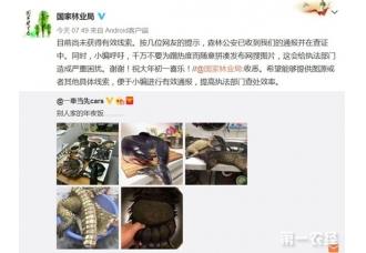 网友晒穿山甲熊掌年夜饭引关注 涉事主人微博道歉称是P图