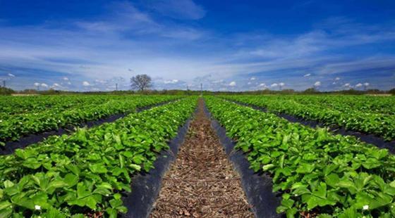 财政部牵头筹建中国农垦产业发展基金 助力乡村振兴战略实施
