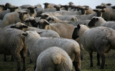 <b>农业部:打造畜牧业发展新模式 加快推进畜牧业转型升级</b>