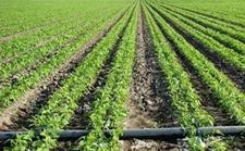 <b>新疆:大面积推广高效节水灌溉技术 超过5200万亩耕地实现高效节水</b>