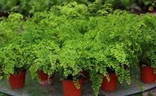 8种具有良好净化空气效果的盆栽植物介绍!净化空气保健康