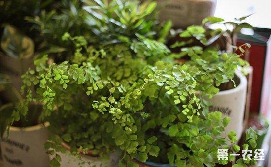 """7种具有""""吸毒""""功效的盆栽植物介绍!家里不可少的天然空气净化器"""