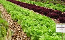 有机蔬菜怎么种植?有机蔬菜的种植技术