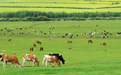 农业部重构新型种养关系 打造畜牧业发展新模式