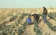 新疆且末防沙治沙生态工程取得明显成效