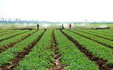 """安徽省:启动农业""""两区""""划定 2019年将全面完成"""