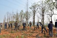重庆三十万人参与2018年春季义务植树示范活动
