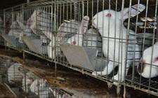 雪天怎么加强养兔场的防护管理工作?
