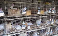 兔舍怎么建造?兔笼如何选择?兔舍的类型与选择
