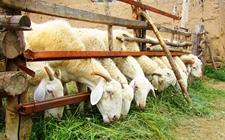 <b>山东平度:促进畜牧产业转型升级 助推现代畜牧业建设稳步向前</b>
