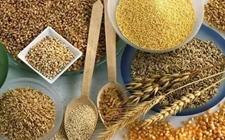 2017年安徽政策性收粮794万吨 促进农民增收超40亿元
