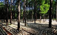 浙江松阳:积极推广林下经济 带动农户增收年产值达亿元