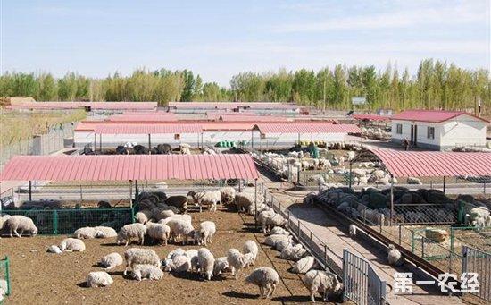 青岛:2018年畜牧加工养殖将向优势区集聚