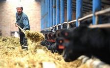 宁夏固原:推进畜禽养殖废弃物资源化利用 构建农牧循环绿色发展