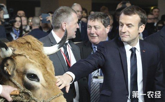 第55届法国国际农业博览会在巴黎开幕  把脉法国农业困境