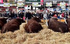 <b>第55届法国国际农业博览会在巴黎开幕 把脉法国农业困境</b>