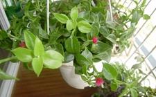 盆栽植物怎么扦插?4种常见盆栽植物的春季扦插方法