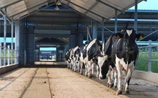 2018年乌克兰或有投资巨头进入养牛行业