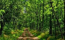 <b>山东东营:2017年实现林业产业产值118亿元 林木育苗面积达16万亩</b>
