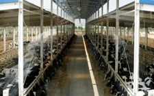 陕西榆林:2017年实现畜牧业增加值59.5亿元 同比增长1.1%