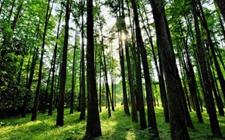 浙江:以林业产业推动乡村发展 助力乡村振兴战略实施