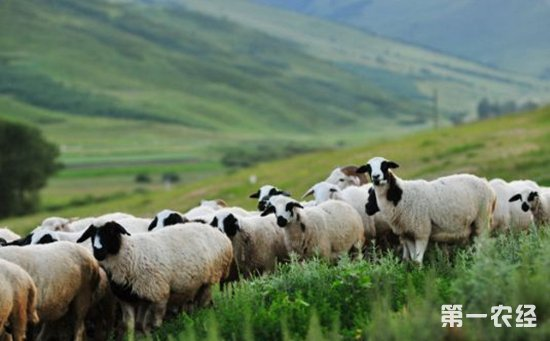 内蒙古:切实加强农畜产品质量监管  加快推进农牧业品牌建设