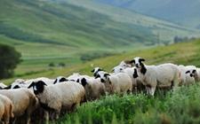 <b>内蒙古:切实加强农畜产品质量监管 加快推进农牧业品牌建设</b>