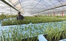 辽阳市进一步加大现代农业科技推广力度 加快农业发展步伐