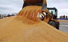 黑龙江粮食产量稳定在1200亿斤以上 已连续7年居全国榜首