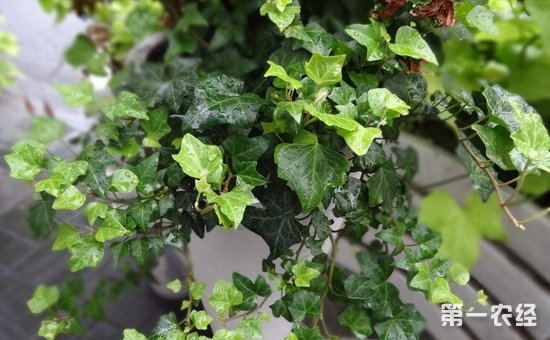 7种具有吸收二手烟效果的盆栽植物介绍!净化空气保健康