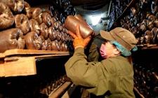 <b>大兴安岭大力发展林下产业 拉动林区经济转型发展</b>
