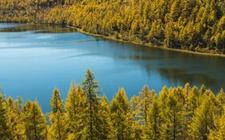 内蒙古确立林业生态建设主体框架 争取营造林面积1000万亩以上