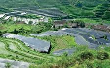 """安徽""""两区""""耕地5年内将全部建成高标准农田"""