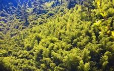 安徽蚌埠:2017年实现林业产值58.1亿元 四举措推进林业产业化发展