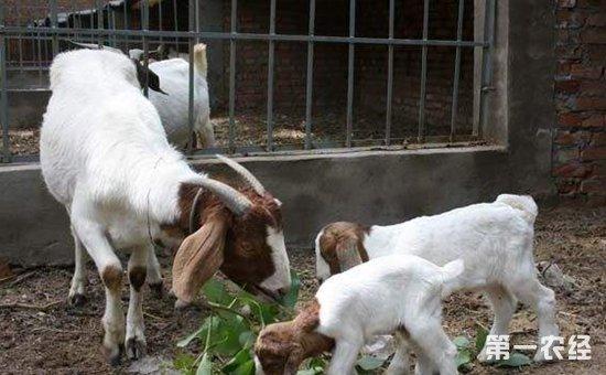 浙江省畜牧兽医工作会议近日召开  高质量推进畜牧业绿色发展