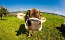 <b>浙江省畜牧兽医工作会议近日召开 高质量推进畜牧业绿色发展</b>